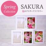 桜のフォトフレーム