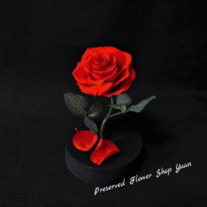 美女と野獣の赤薔薇