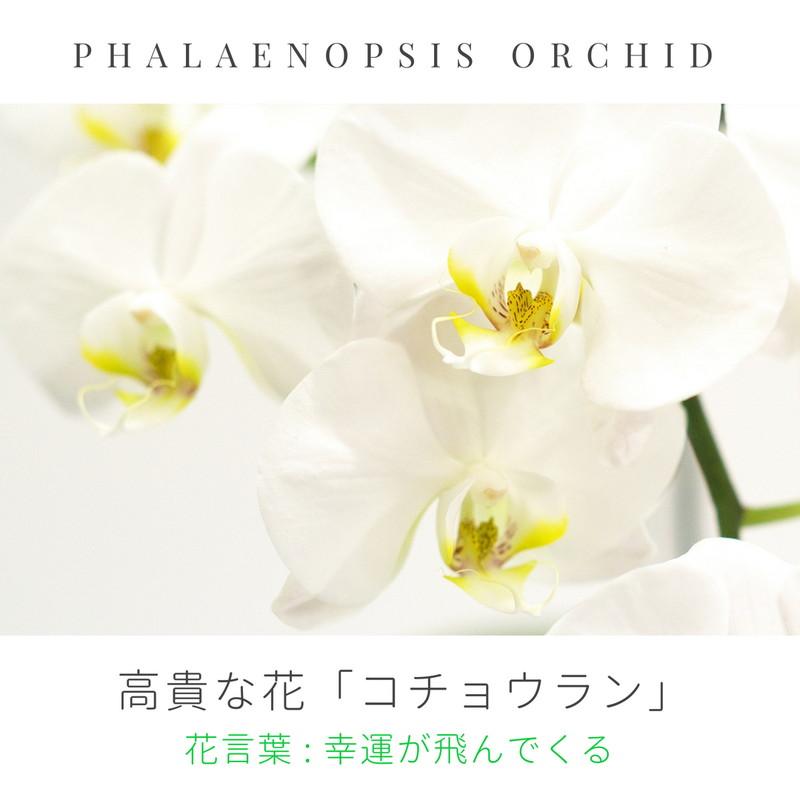 胡蝶蘭のプリザーブドフラワーのフォトフレーム