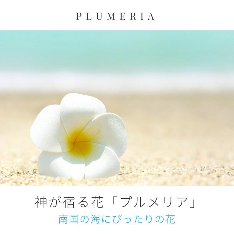 プルメリアのプリザーブドフラワー