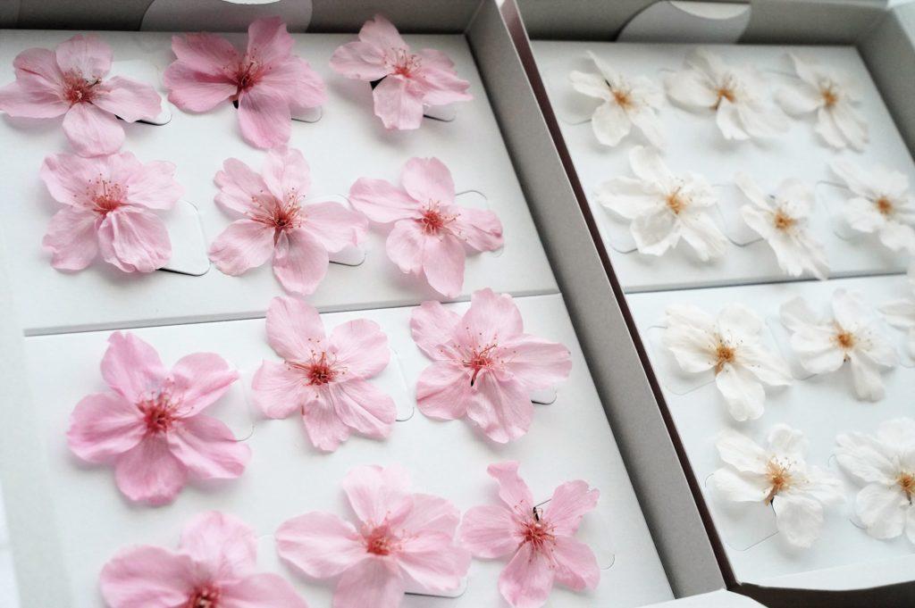 プリザーブドフラワーの桜